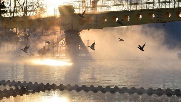 Дикие утки спасаются от морозов на очистных сооружениях в Петербурге