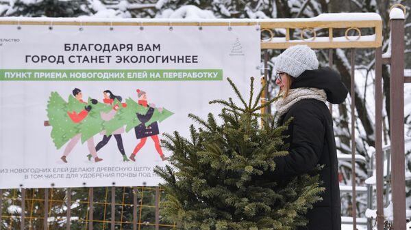 Утилизация елок в Москве