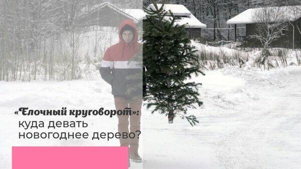 Елочный круговорот: куда девать новогоднее дерево?