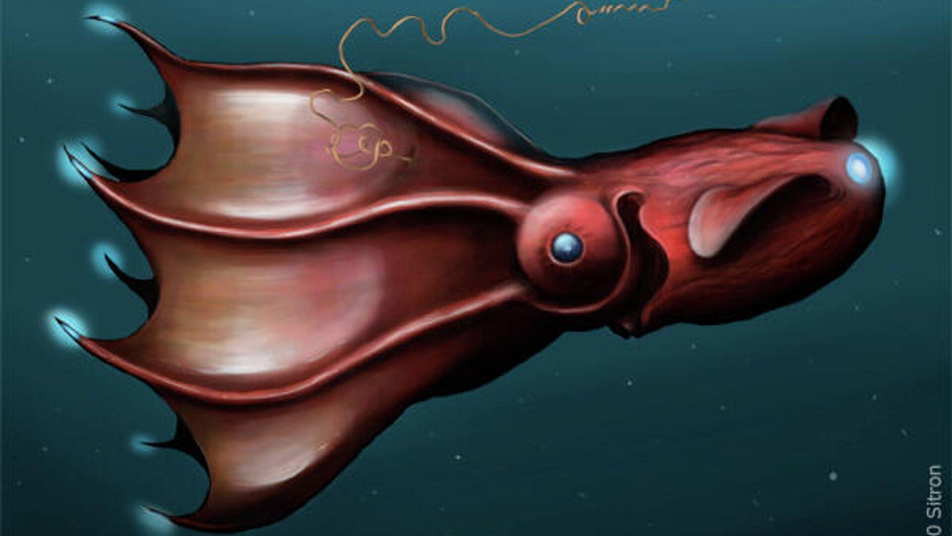 Адский кальмар-вампир Vampyroteuthis infernalis - РИА Новости, 1920, 18.02.2021