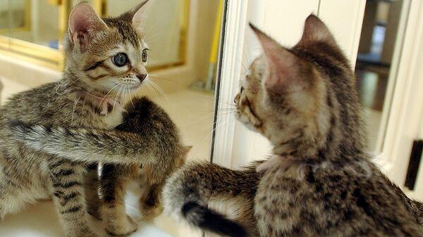 Клонированные котята в Сан-Франциско