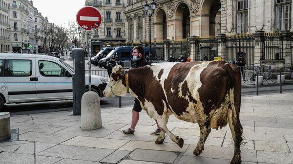 Фермер выгуливает корову перед мэрией Лиона во время акции против предложения исключить мясо из меню школьных столовых