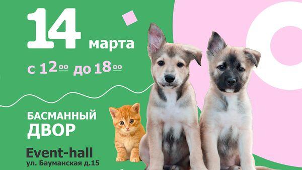 Юна-Фест выставка кошек и собак из приютов