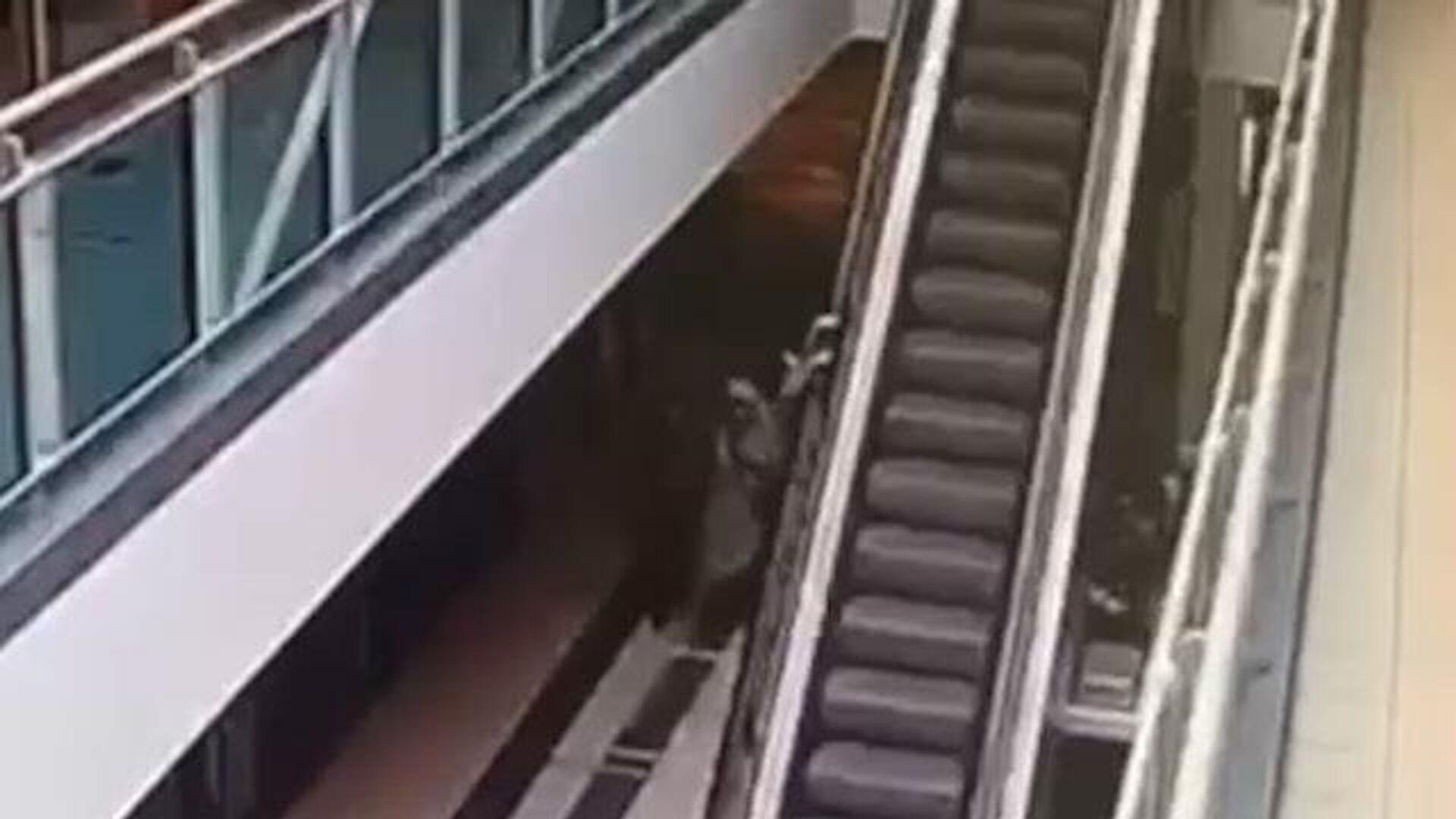 Ребенок сорвался с высоты на эскалаторе в ТЦ. Кадры камеры наблюдения - РИА Новости, 1920, 04.03.2021