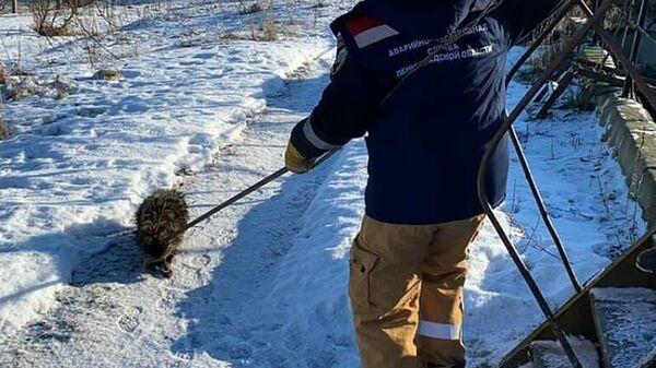 Спасение енотовидной собаки из очистных сооружений в Ленинградской области