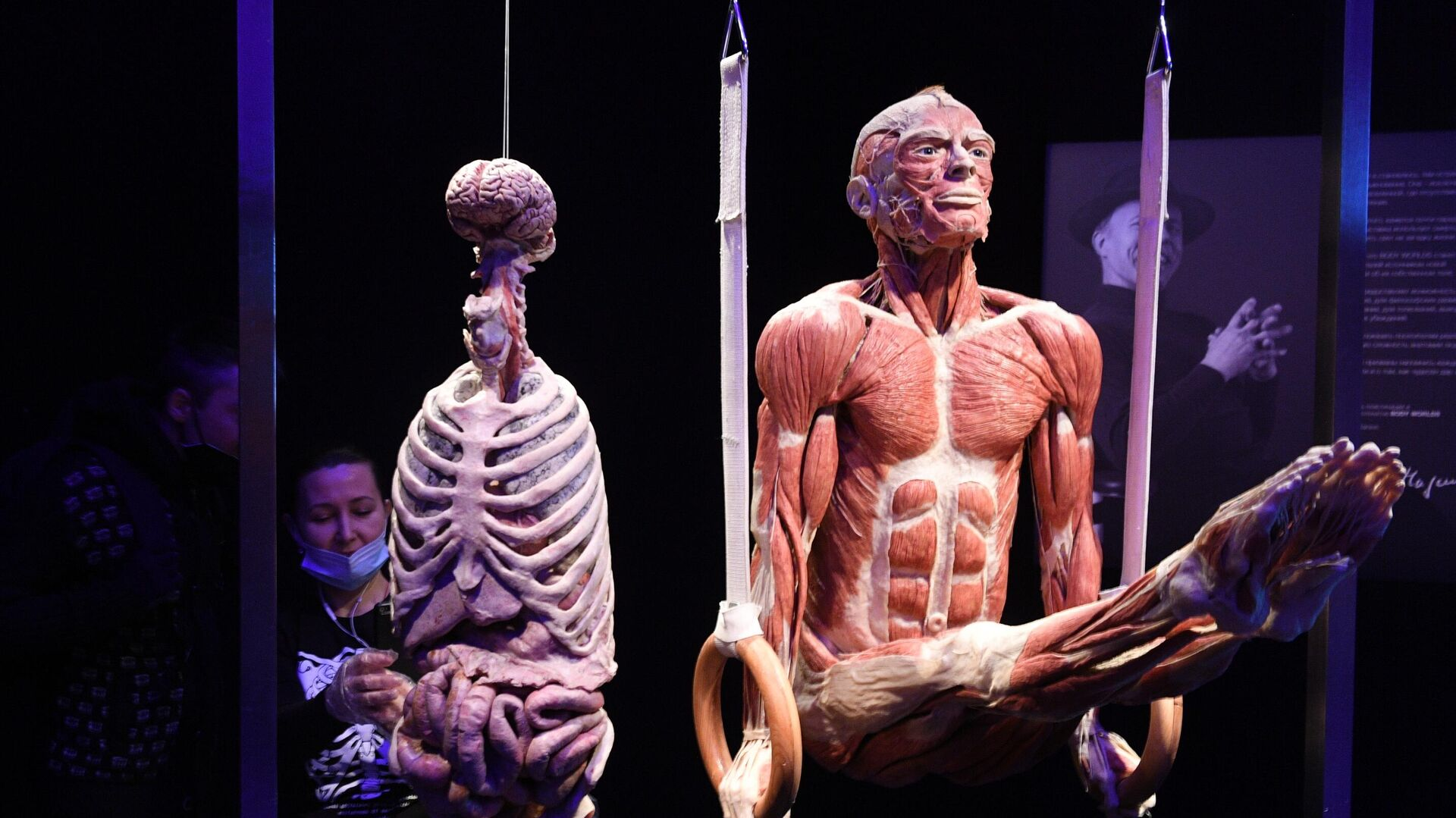 Выставка Body Worlds. Мир тела в Москве - РИА Новости, 1920, 24.03.2021