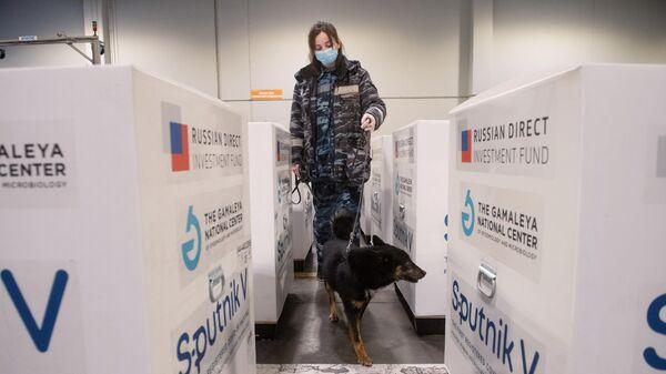 Кинолог со служебной собакой проверяет груз с российской вакциной Sputnik V от коронавирусной инфекции covid-19, доставленный на склад в грузовой терминал Москва Карго в аэропорту Шереметьево