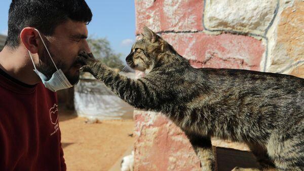 Кошачий приют в сирийском Идлибе