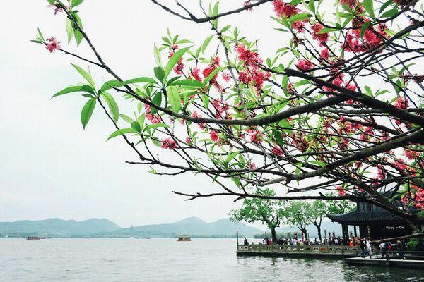 Весна в Ханчжоу