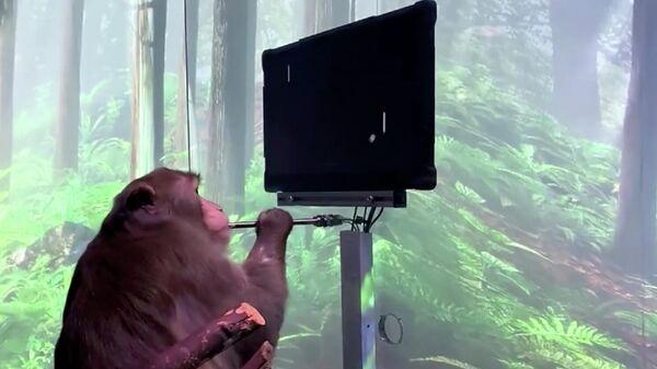 Кадр видео, на котором обезьяна с вживленным чипом Neuralink играет в видеоигру силой мысли