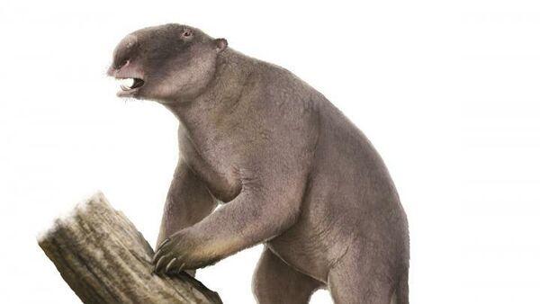 Палорхест, или сумчатый тапир - один из представителей вымершей плейстоценовой мегафауны Австралии. Он был размером с корову и весил около 500 килограмм