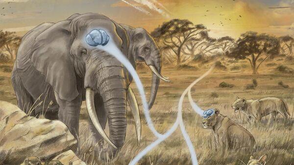 Эволюция размеров мозга у млекопитающих