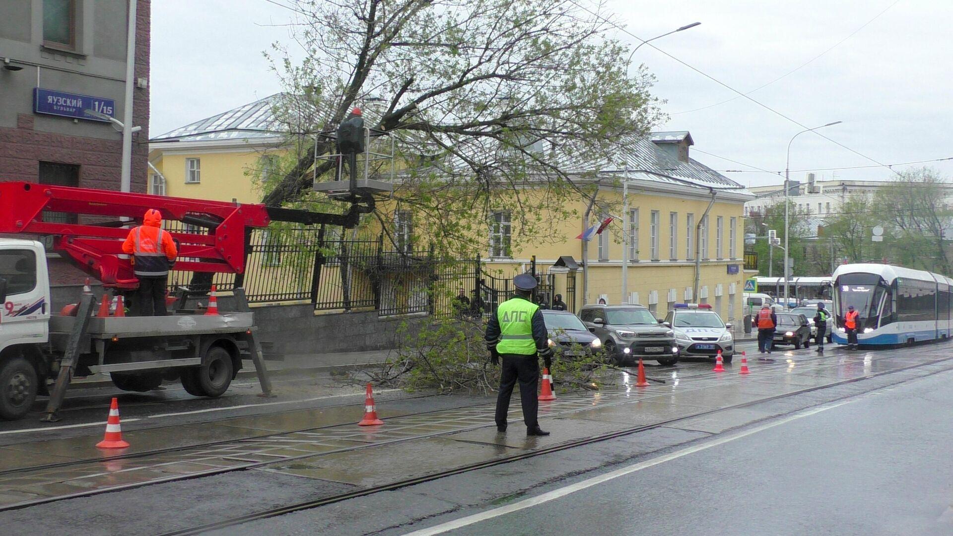 Аварийные службы устраняют последствия упавшего дерева на проезжую часть на Яузском бульваре - РИА Новости, 1920, 12.06.2021