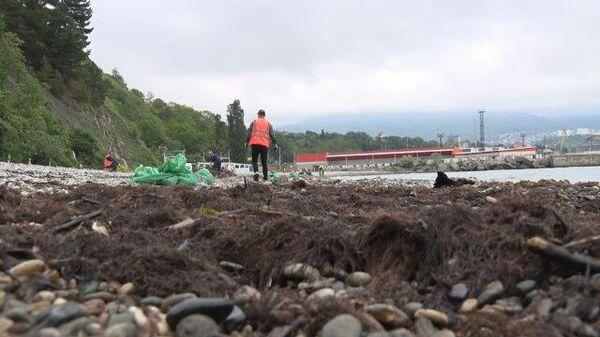 Устранение последствий разлива нефти на пляже в Туапсе