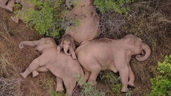 Слоны, отдыхающие в лесу недалеко от Куньмина в юго-западной провинции Юньнань в Китае