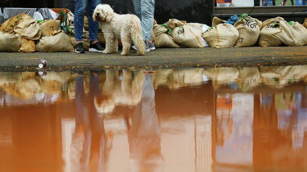 Собака стоит рядом с мешками с песком на затопленной улице после проливных дождей в Эрфтштадте, Германия