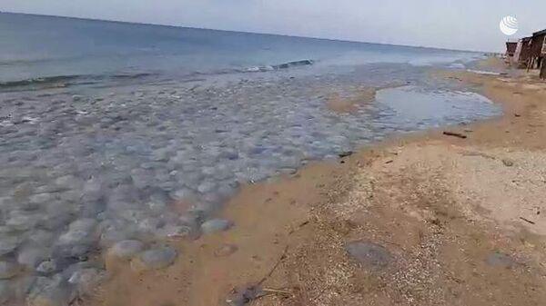 Медузы заполонили азовское побережье