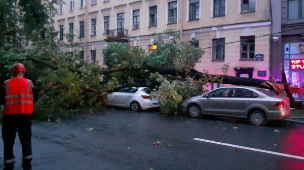Последствия сильного ветра в Санкт-Петербурге