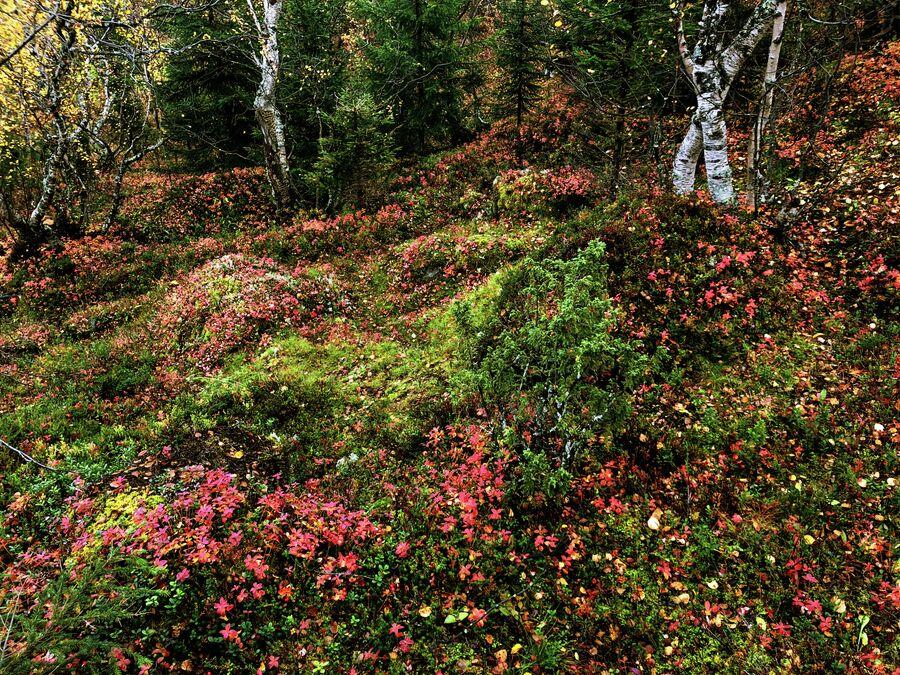 Растительность тундры