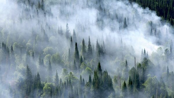 Лесные пожары в Красноярском крае. Архивное фото.