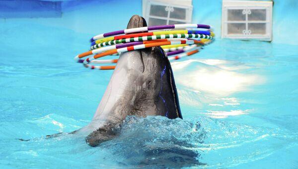 Представление в Донецком дельфинарии