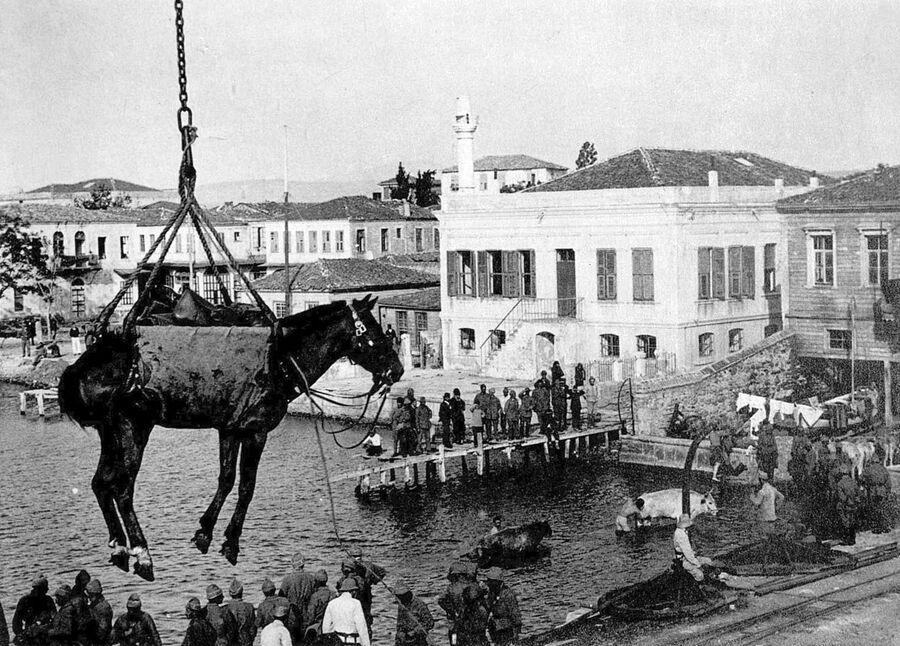 Транспортировка лошади в турецком порту во время Первой мировой войны