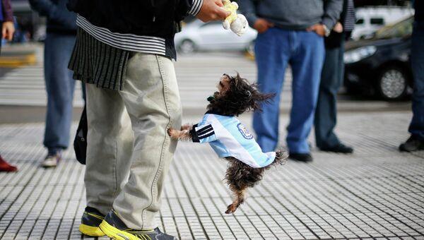 Болельщик сборной Аргентины с собакой на ЧМ по футболу в Рио-де-Жанейро