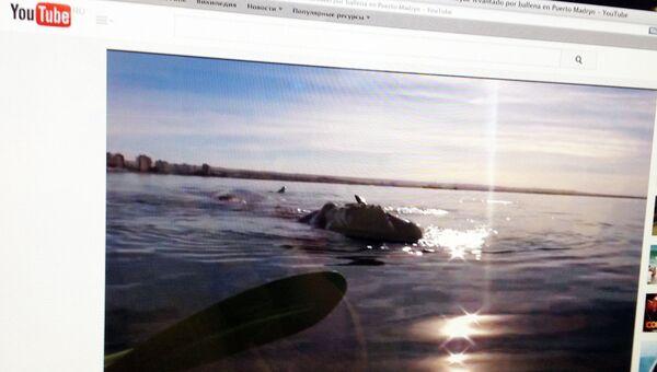 Страница с видео в YouTube на котором видно, как огромный кит поднимает на своей спине каяк с двумя гребцами