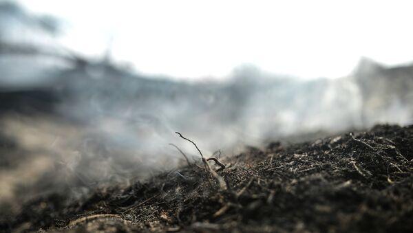 Последствия лесных пожаров. Архивное фото