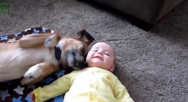 Видео в YouTube: дети и животные
