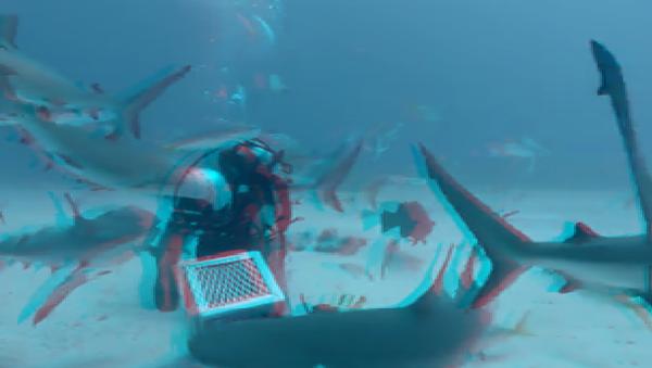 Сошел за своего: аквалангист оказался в самом логове акул