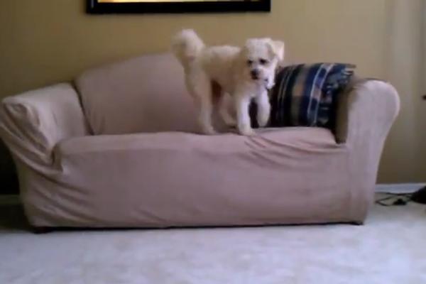 Куда он делся: собака потеряла лопнувший шарик