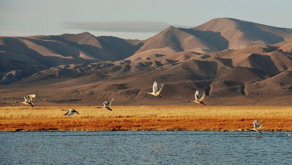 Птицы на небольшом озере на Алтае. Архивное фото