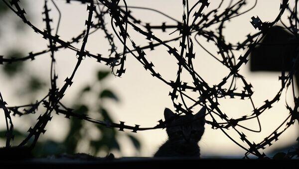 Котенок на территории военной части внутренних войск в Луганске, взятой под контроль ополченцами после ночного боя. Архивное фото