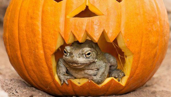 Хеллоуин в зоопарке Вены