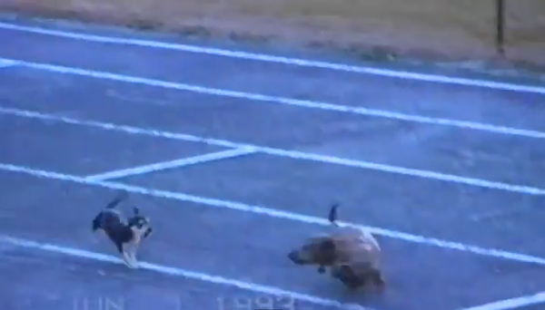 Запрещенный прием: собака избавляется от конкурентов