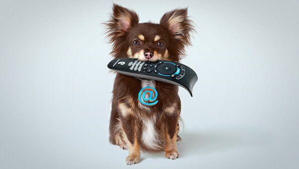 Собака с пультом дистанционного управления