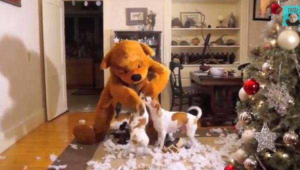 Плюшевый Тедди, устроивший сюрприз двум псам