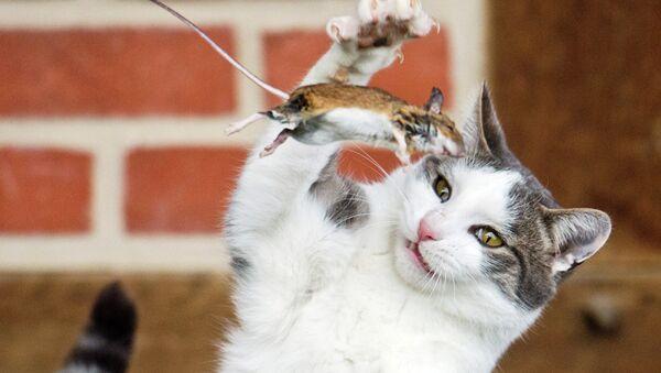 Кот играет с мышью на ферме в Германии
