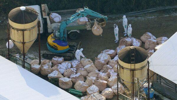 Уничтожение кур в Японии из-за угрозы птичьего гриппа