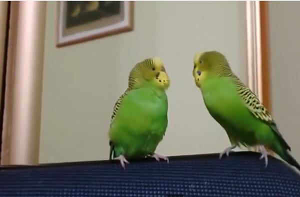 О чем говорят попугаи, или Кушать, Жорочка!