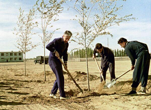 Экипаж космического корабля Восход сажают деревья в парке Дружбы накануне полета в космос. Космодром Байконур. Октябрь 1964 года