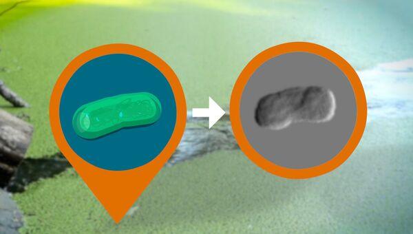 Рентгеновский снимок одиночной бактерии (справа) и вид ее «изнутри» в представлении художника (слева)