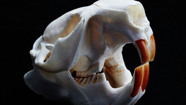 фото бобра зубы