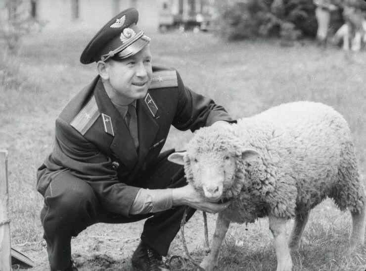 Лётчик-космонавт Алексей Леонов оценивает барана, присланного в подарок Юрию Гагарину. 1965 год