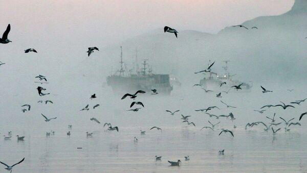 Рыболовецкие суда у берегов острова Шикотан в бухте Крабовой. Сахалинская область