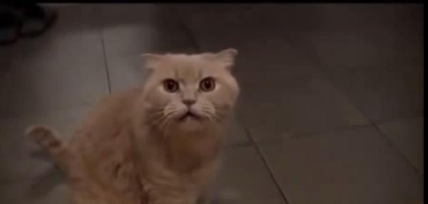Спой мне еще: удивительный дуэт кота и человека