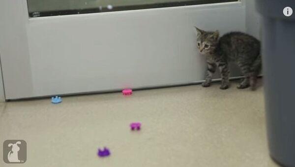 Кто пугает котенка?
