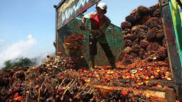 Слезли с пальмы: для пальмового масла отменят льготы