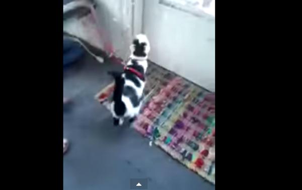 На прогулку с котом